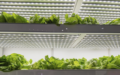 Make your plants grow faster with LED